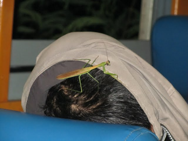 Mantis performance on the train to Bangkok