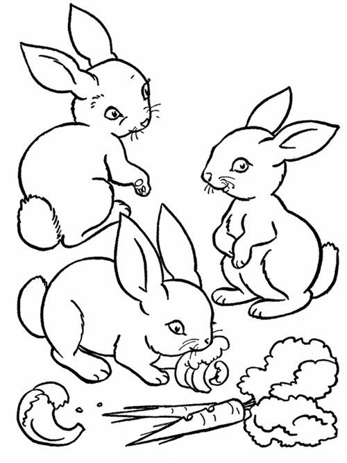 coloring pages for girls animals - Wild Animals Coloring Pages and Activity sheets for PreK Kids