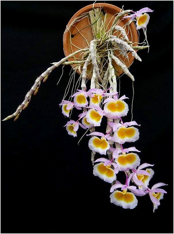 Long tu Lào tuyệt đẹp đúng không