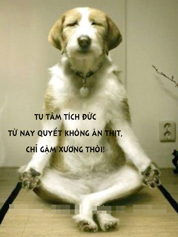 Ảnh chú chó đang ngồi thiền