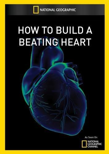 Jak stworzyæ bij±ce serce / How To Build A Beating Heart (2010) PL.TVRip.XviD / Lektor PL