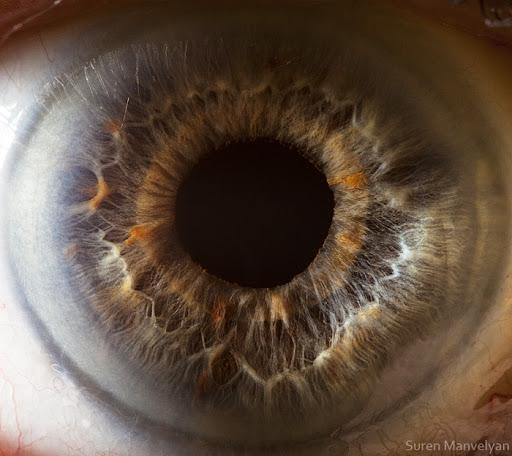 Veja o olho humano em um super close