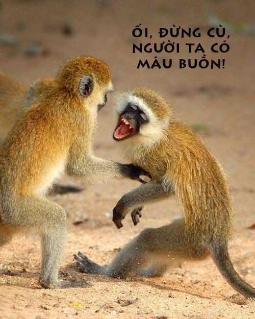 Ảnh chế buồn cười về Khỉ