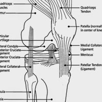 How To Take Care of Your Knees post image