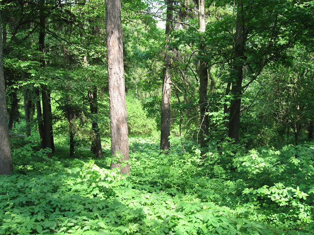 деревья краснокутский дендропарк