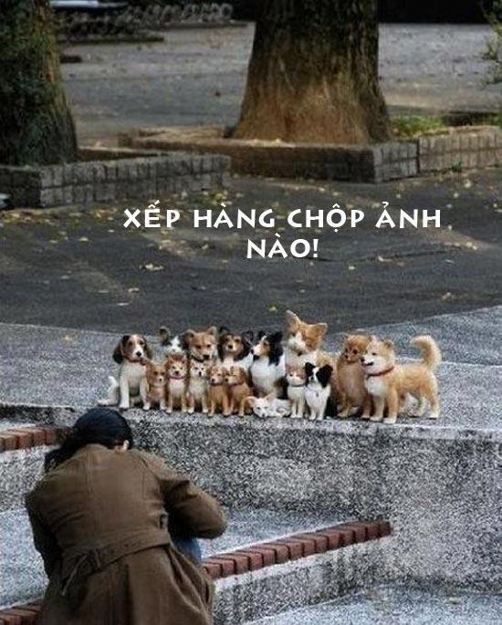 Ảnh vui các chú cún xếp hàng chụp ảnh