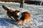 Hundesprog....!