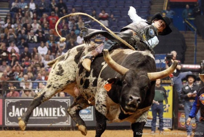 Родео бык