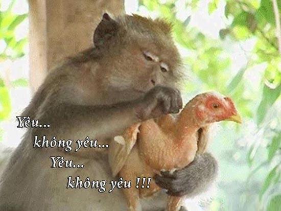 Khỉ nhổ lông gà