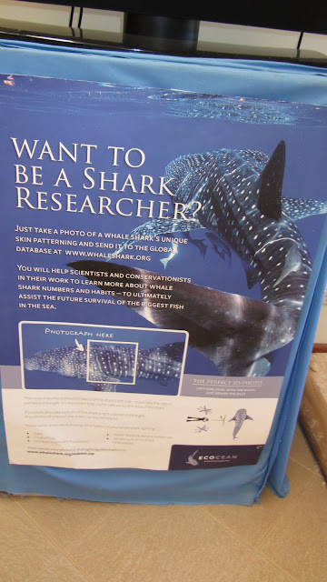 A whale shark appeal in Exmouth.