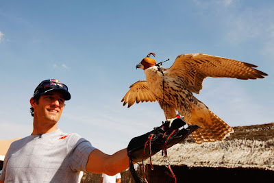 ручной сокол размахивает крыльями на руке Марка Уэббера перед Гран-при Абу-Даби 2011