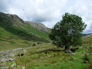 A lonely tree in the Langstrath Valley.