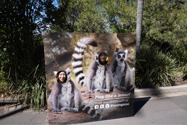 taronga zoo sydney australia lemur photo