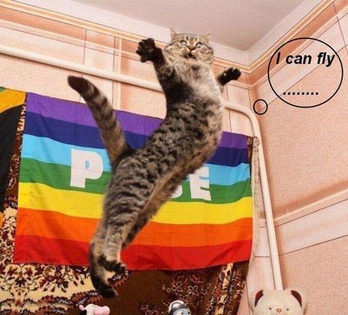Ảnh mèo tạo dáng và bay