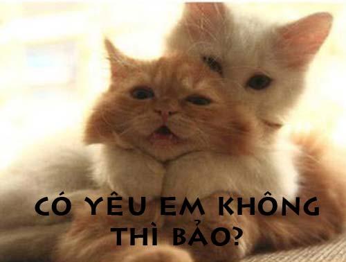 Ảnh chế Mèo hài hước, vui nhộn nhất
