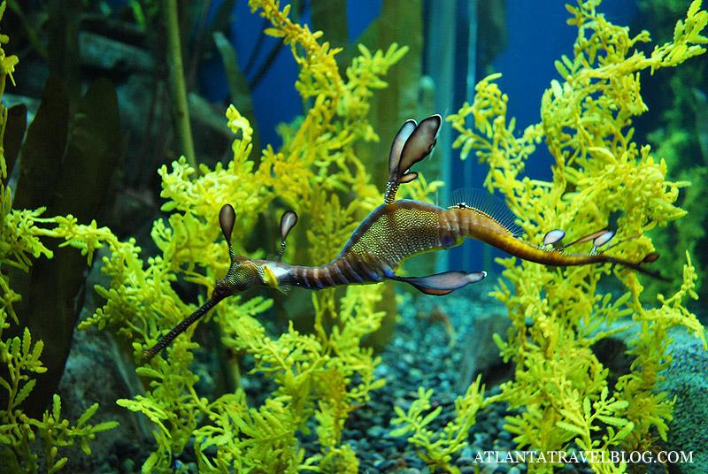 Аквариум в Атланте Georgia Aquarium.