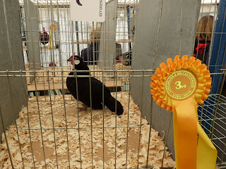 Loweswater Show - Only 3rd!!!!!