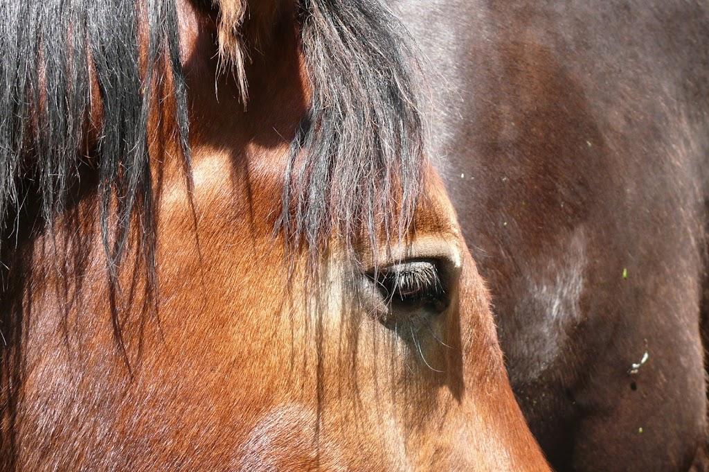 thème mai 2012: un bout de cheval !  - Page 3 P1040055