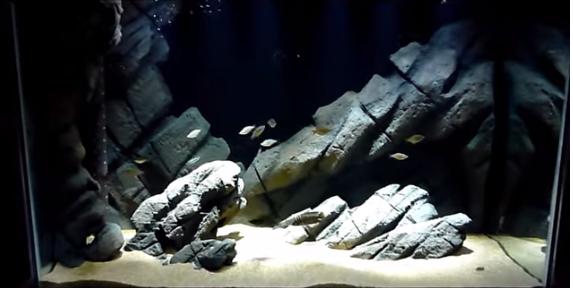 đèn kẹp thủy sinh 11W - sản phẩm được ưa chuộng cho hồ nhỏ