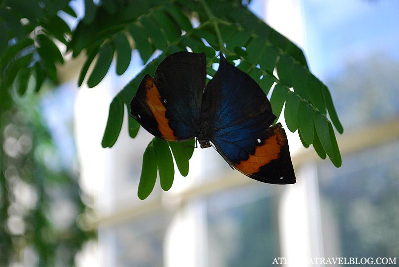 Фото бабочки