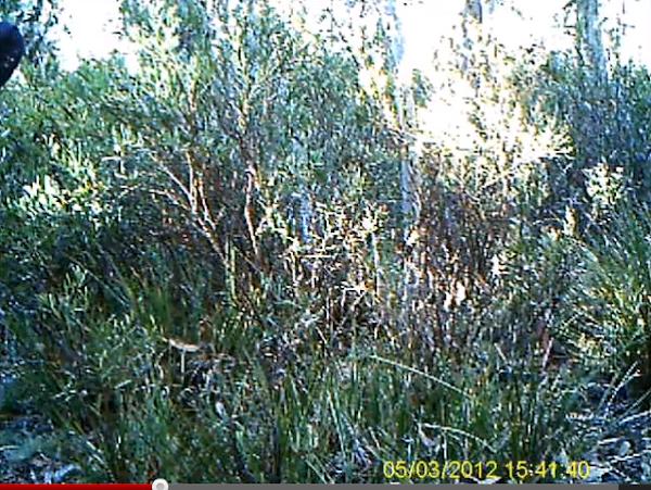 trail cam screenshot