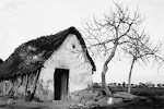 Barraca de la huerta. Años 40. (Arch. Foto de D.Francisco Oliver Forner). Biblioteca Municipal de Catral.