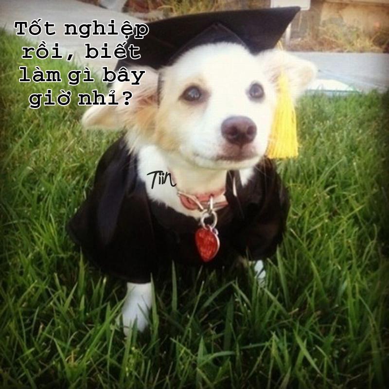 Ảnh chú chó tốt nghiệp đại học