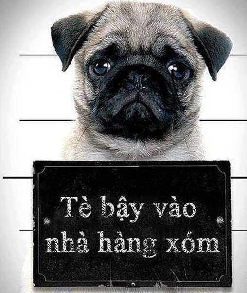Ảnh chú chó bị phạt vì tè bậy nhà hàng xóm