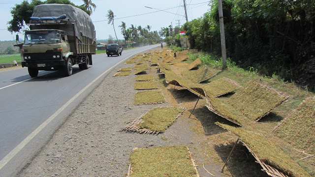 Tobacco drying on the side of the road in Central Java.