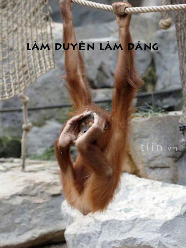 Khỉ đu dây