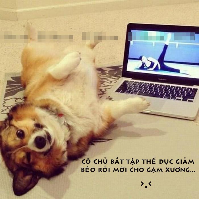 Ảnh chú chó hài hước tập thể dục