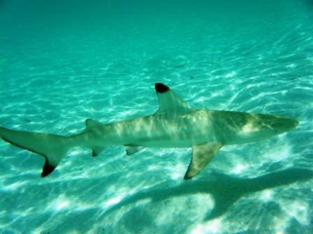 el mundo acuatico de las maldivas
