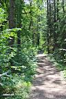 Mišrus miškas