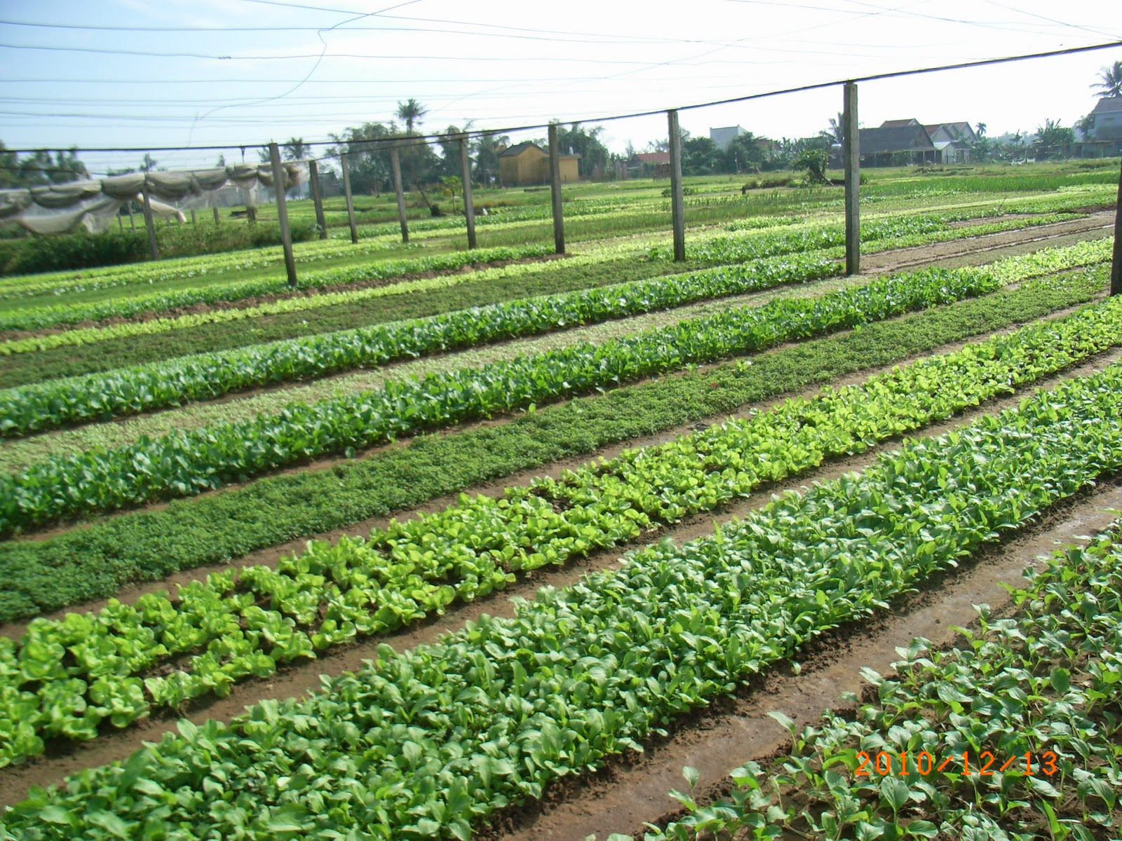 Eco Vegetable Farm