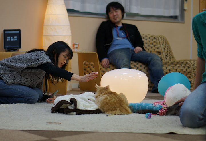 tokyo cat cafe in shinjuku nekorobi