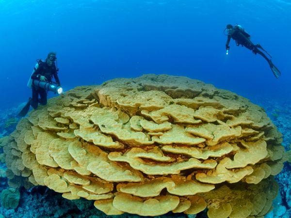 На воде  грибы