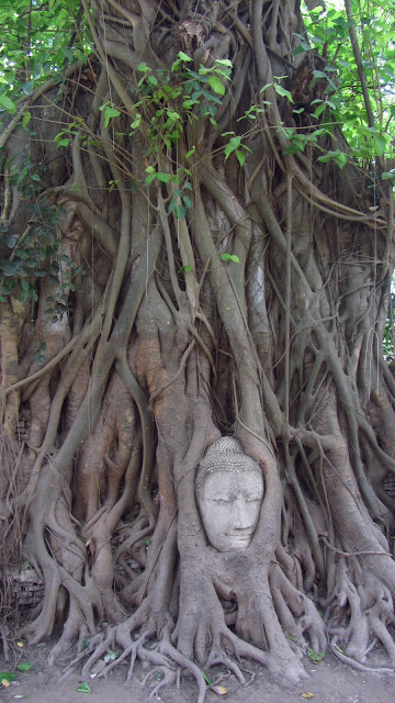 The famous Buddha tree.