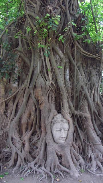 The famous Buddha tree.