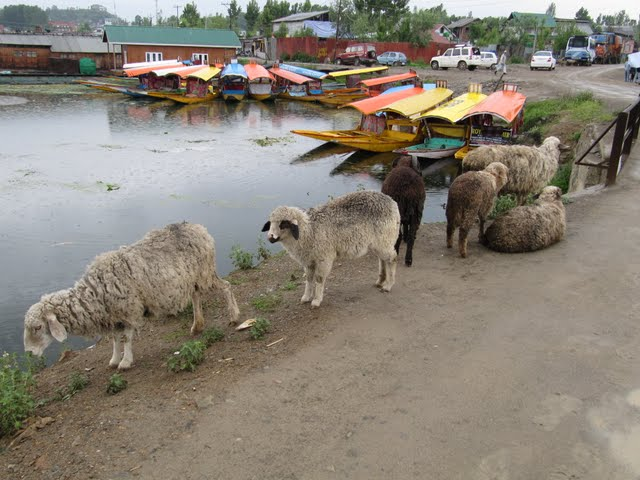 House boats Srinagar