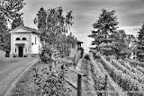 15 giugno 2013 - Assedio di Canelli (Asti)- fotografia di Vittorio Ubertone