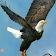 فريد س. avatar