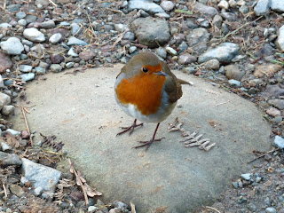 I had a little friend on my walk along Loughrigg Terrace