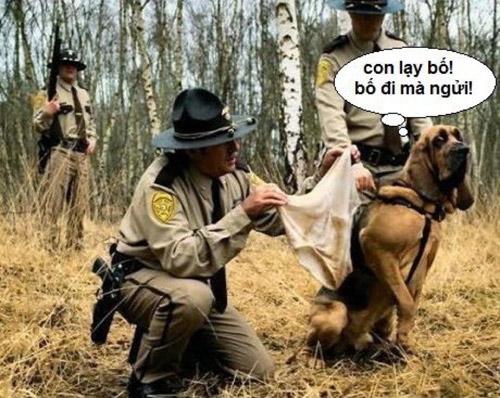 Ảnh hài hước về chú chó đi bắt tội phạm