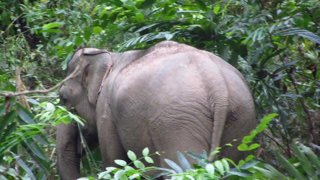 One of the three elephants.