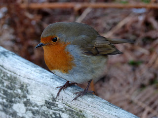 Such a lovely little bird