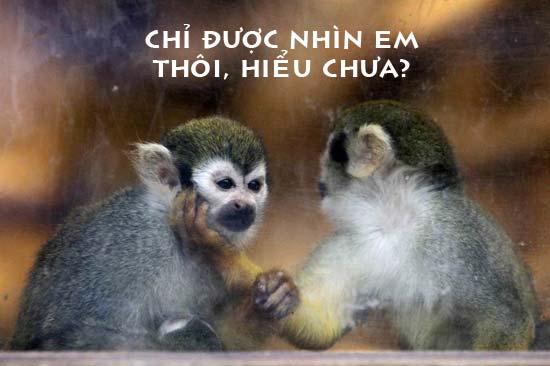 Khỉ ghen