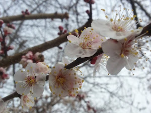 April 2014 started with blossoming trees. Scroll down for more photos from the month.  (LW Inactivist)