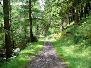 Walking through the forest - Whinlatter