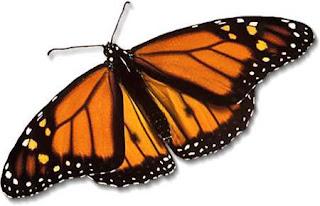 Mariposa con las alas extendidas