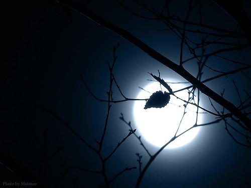 hình ảnh ánh trăng sau chiếc lá mùa đông